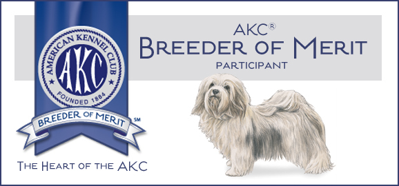 Havanese breeder of merit